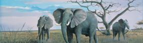 African Elephants  Rear Window Graphic