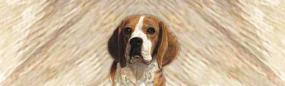 Beagle Portrait Rear Window Graphic