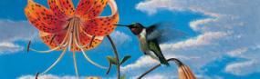 Hummingbird & Daylily  Rear Window Graphic