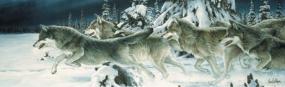 Midnight Run-Wolves Rear Window Graphic