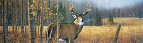 November Whitetail  Rear Window Graphic