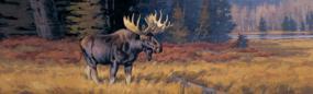 October Moose  Rear Window Graphic