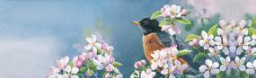 Robin In Apple Blossoms  Rear Window Graphic