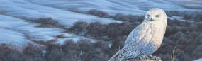 Snowy Owl Winter Rear Window Graphic