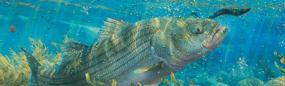 Tidal Pool Predator  Rear Window Graphic