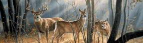 Woodland Splendor-Deer Rear Window Graphic