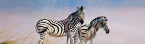 Zebras Of Namibia  Rear Window Graphic