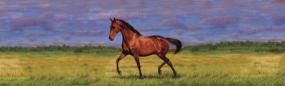 That's My Horse Thoroughbred Bay Rear Window Graphic