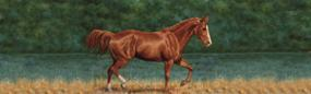 That's My Horse Quarter Horse Sorrel Rear Window Graphic