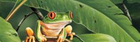Small World Red Eyed Tree Frog Rear Window Graphic