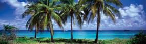 Yorke Island Palms Rear Window Graphic
