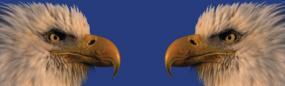 Bald Eagle Silhouette Rear Window Graphic