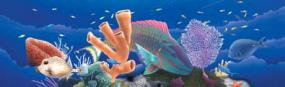 Coral Reef Rear Window Graphic