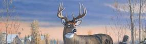 Whitetail Deer  Rear Window Graphic