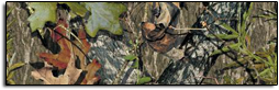 Click Here For Mossy Oak Obsession Rear Window Graphics