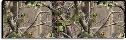 Click Here For Realtree Apg Rear Window Graphics